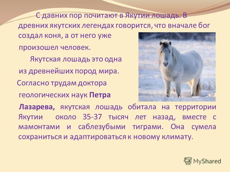 С давних пор почитают в Якутии лошадь. В древних якутских легендах говорится, что вначале бог создал коня, а от него уже произошел человек. Якутская лошадь это одна из древнейших пород мира. Согласно трудам доктора геологических наук Петра Лазарева,