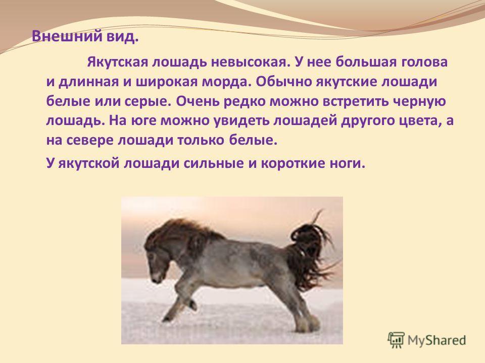 Внешний вид. Якутская лошадь невысокая. У нее большая голова и длинная и широкая морда. Обычно якутские лошади белые или серые. Очень редко можно встретить черную лошадь. На юге можно увидеть лошадей другого цвета, а на севере лошади только белые. У