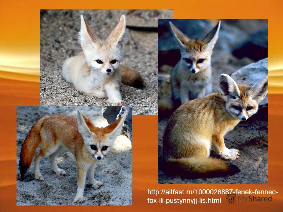 http://altfast.ru/1000028887-fenek-fennec- fox-ili-pustynnyjj-lis.html