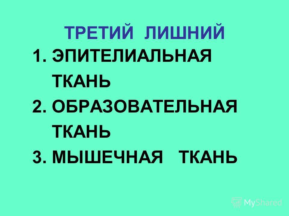 1. ЭПИТЕЛИАЛЬНАЯ ТКАНЬ 2. ОБРАЗОВАТЕЛЬНАЯ ТКАНЬ 3. МЫШЕЧНАЯ ТКАНЬ