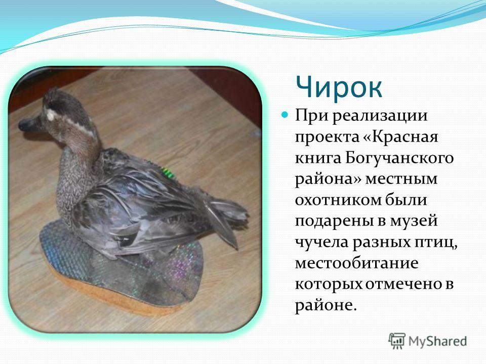 Чирок При реализации проекта «Красная книга Богучанского района» местным охотником были подарены в музей чучела разных птиц, местообитание которых отмечено в районе.