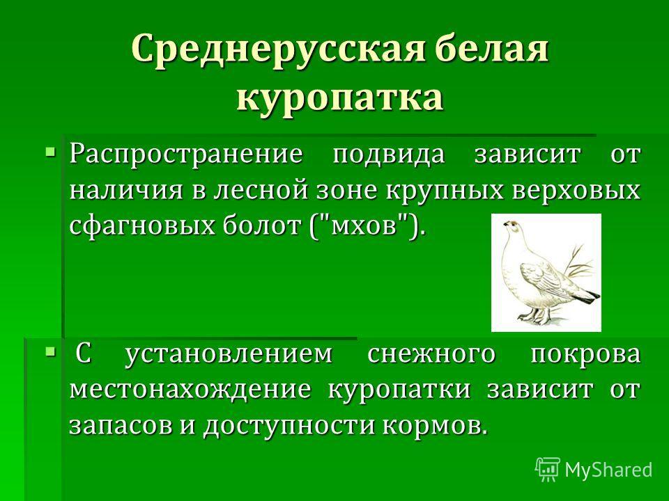 Среднерусская белая куропатка Распространение подвида зависит от наличия в лесной зоне крупных верховых сфагновых болот (