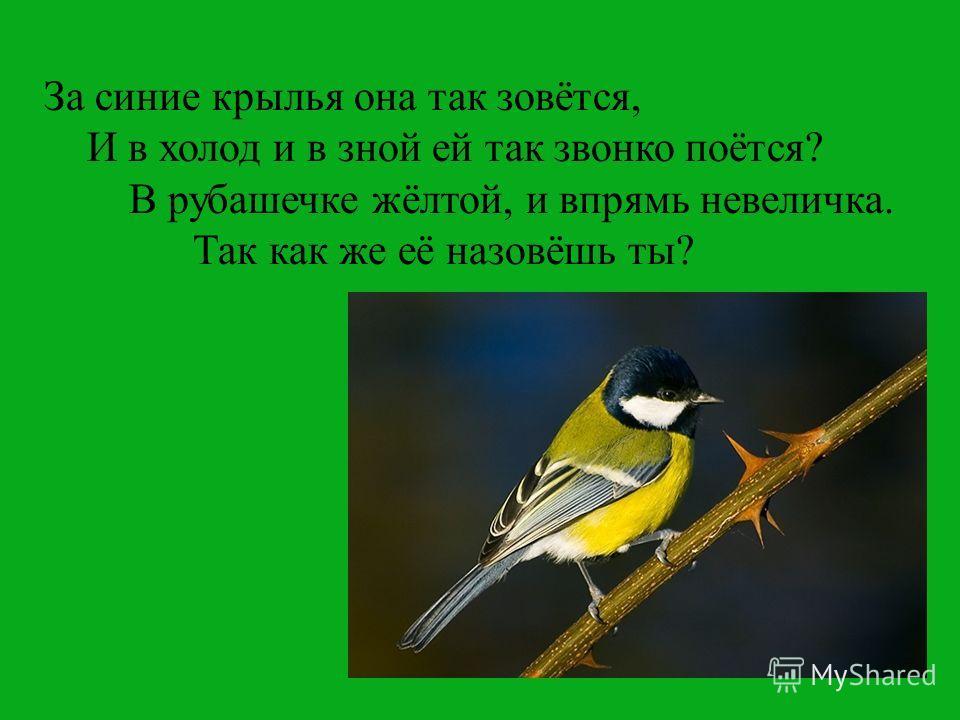 За синие крылья она так зовётся, И в холод и в зной ей так звонко поётся? В рубашечке жёлтой, и впрямь невеличка. Так как же её назовёшь ты?