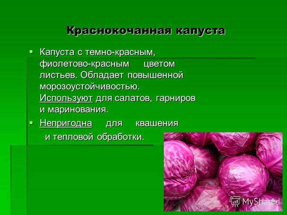 Краснокочанная капуста Капуста с темно-красным, фиолетово-краснымцветом листьев. Обладает повышенной морозоустойчивостью. Используют для салатов, гарниров и маринования. Капуста с темно-красным, фиолетово-краснымцветом листьев. Обладает повышенной мо