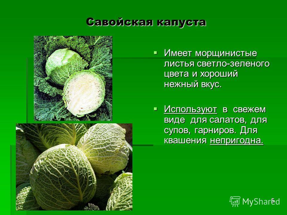 Савойская капуста Имеет морщинистые листья светло-зеленого цвета и хороший нежный вкус. Имеет морщинистые листья светло-зеленого цвета и хороший нежный вкус. Используют в свежем виде для салатов, для супов, гарниров. Для квашения непригодна. Использу