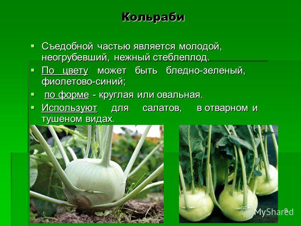 Кольраби Съедобной частью является молодой, неогрубевший, нежный стеблеплод. Съедобной частью является молодой, неогрубевший, нежный стеблеплод. По цвету может быть бледно-зеленый, фиолетово-синий; По цвету может быть бледно-зеленый, фиолетово-синий;