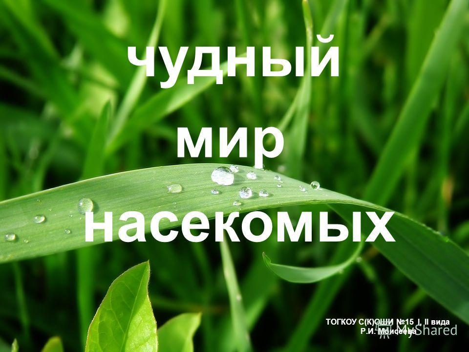 чудный ТОГКОУ С(К)ОШИ 15 I, II вида Р.И. Моисеева насекомых мир