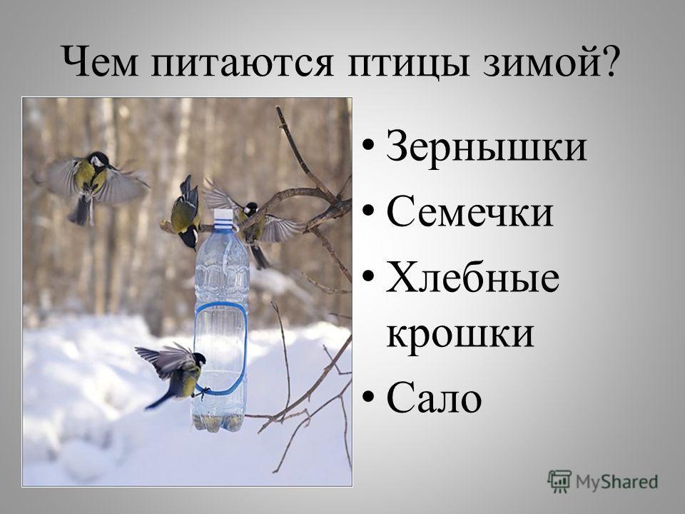 Чем питаются птицы зимой? Зернышки Семечки Хлебные крошки Сало