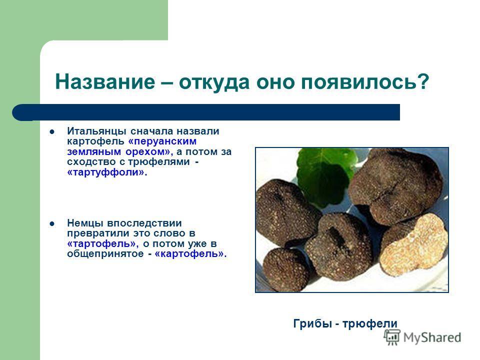Название – откуда оно появилось? Итальянцы сначала назвали картофель «перуанским земляным орехом», а потом за сходство с трюфелями - «тартуффоли». Немцы впоследствии превратили это слово в «тартофель», о потом уже в общепринятое - «картофель». Грибы