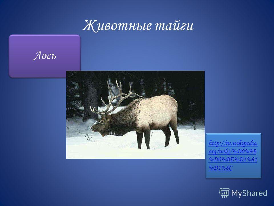 Животные тайги Лось http://ru.wikipedia. org/wiki/%D0%9B %D0%BE%D1%81 %D1%8C http://ru.wikipedia. org/wiki/%D0%9B %D0%BE%D1%81 %D1%8C