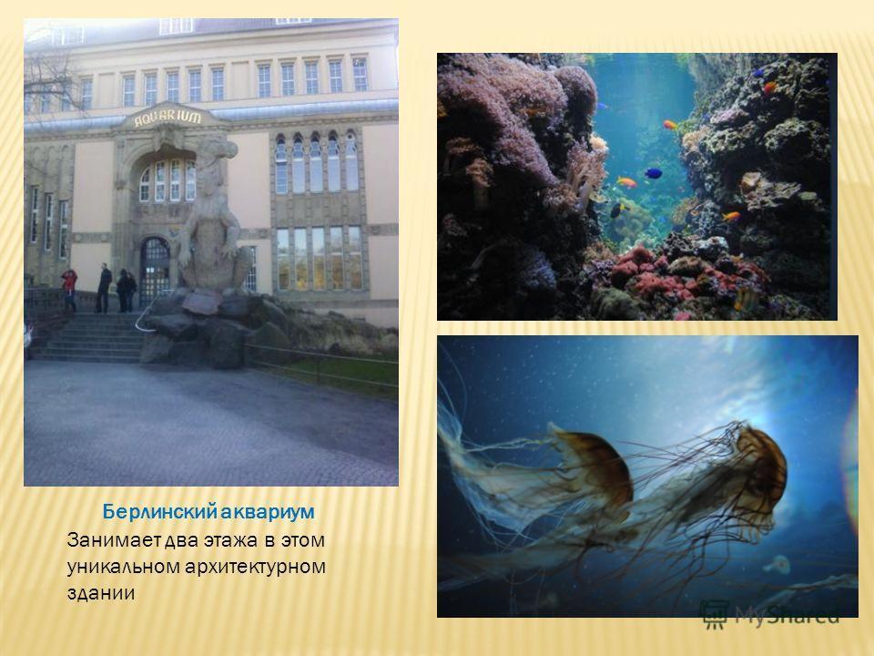 Берлинский аквариум Занимает два этажа в этом уникальном архитектурном здании