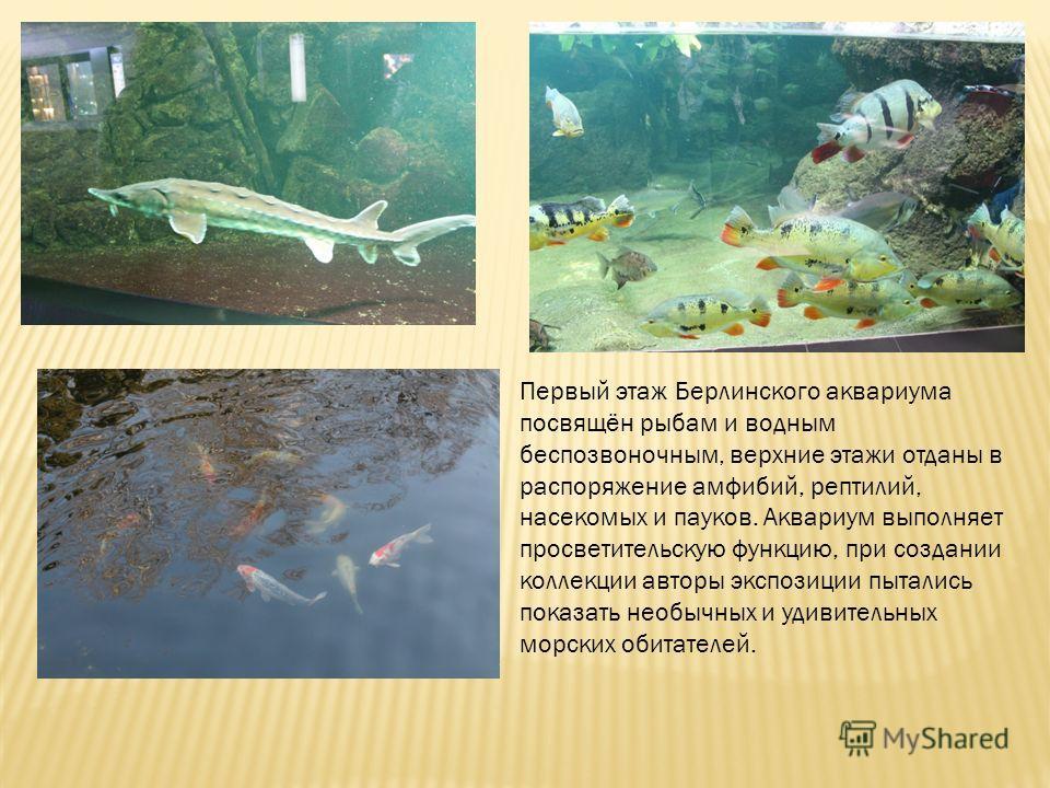 Первый этаж Берлинского аквариума посвящён рыбам и водным беспозвоночным, верхние этажи отданы в распоряжение амфибий, рептилий, насекомых и пауков. Аквариум выполняет просветительскую функцию, при создании коллекции авторы экспозиции пытались показа