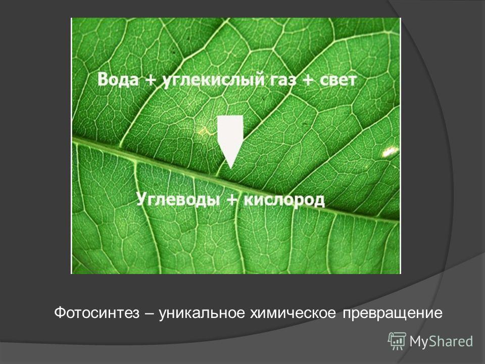 Фотосинтез – уникальное химическое превращение