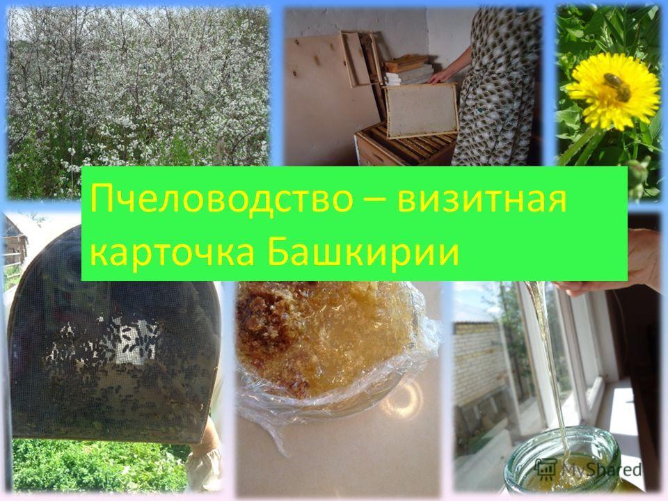 Пчеловодство – визитная карточка Башкирии