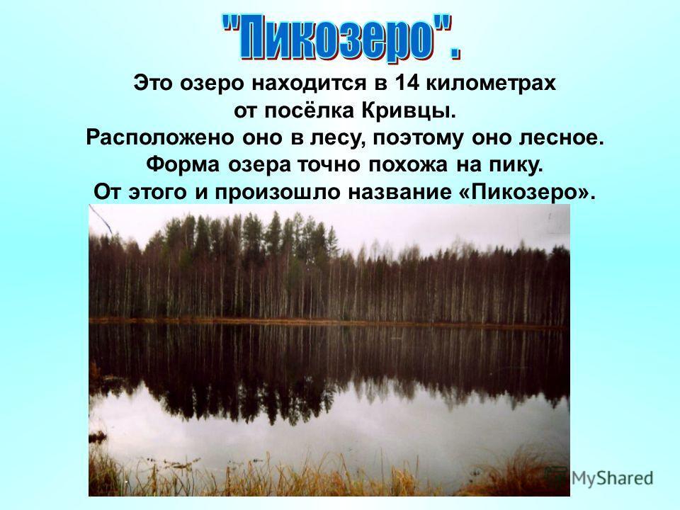 Это озеро находится в 14 километрах от посёлка Кривцы. Расположено оно в лесу, поэтому оно лесное. Форма озера точно похожа на пику. От этого и произошло название «Пикозеро».