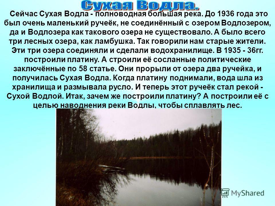 Сейчас Сухая Водла - полноводная большая река. До 1936 года это был очень маленький ручеёк, не соединённый с озером Водлозером, да и Водлозера как такового озера не существовало. А было всего три лесных озера, как ламбушка. Так говорили нам старые жи