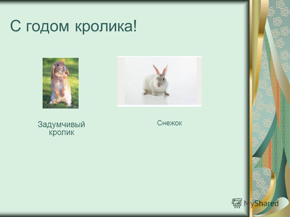 С годом кролика! Задумчивый кролик Снежок