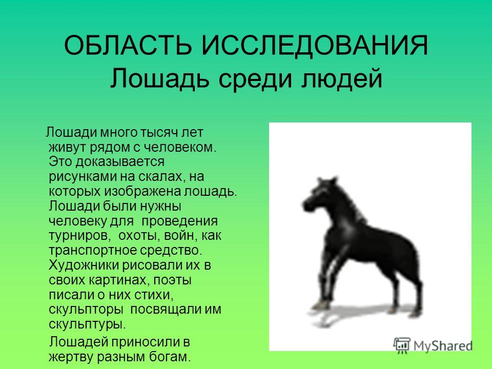 ОБЛАСТЬ ИССЛЕДОВАНИЯ Лошадь среди людей Лошади много тысяч лет живут рядом с человеком. Это доказывается рисунками на скалах, на которых изображена лошадь. Лошади были нужны человеку для проведения турниров, охоты, войн, как транспортное средство. Ху