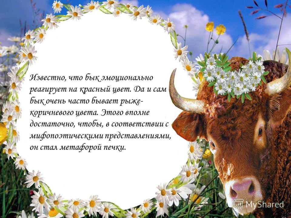 Известно, что бык эмоционально реагирует на красный цвет. Да и сам бык очень часто бывает рыже- коричневого цвета. Этого вполне достаточно, чтобы, в соответствии с мифопоэтическими представлениями, он стал метафорой печки.