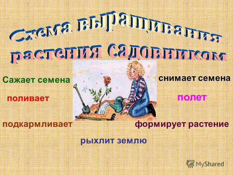Сажает семена поливает рыхлит землю полет формирует растение снимает семена подкармливает
