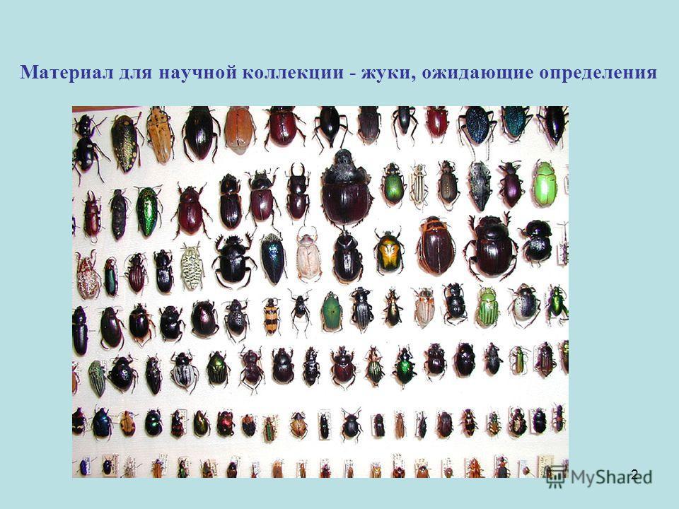2 Материал для научной коллекции - жуки, ожидающие определения