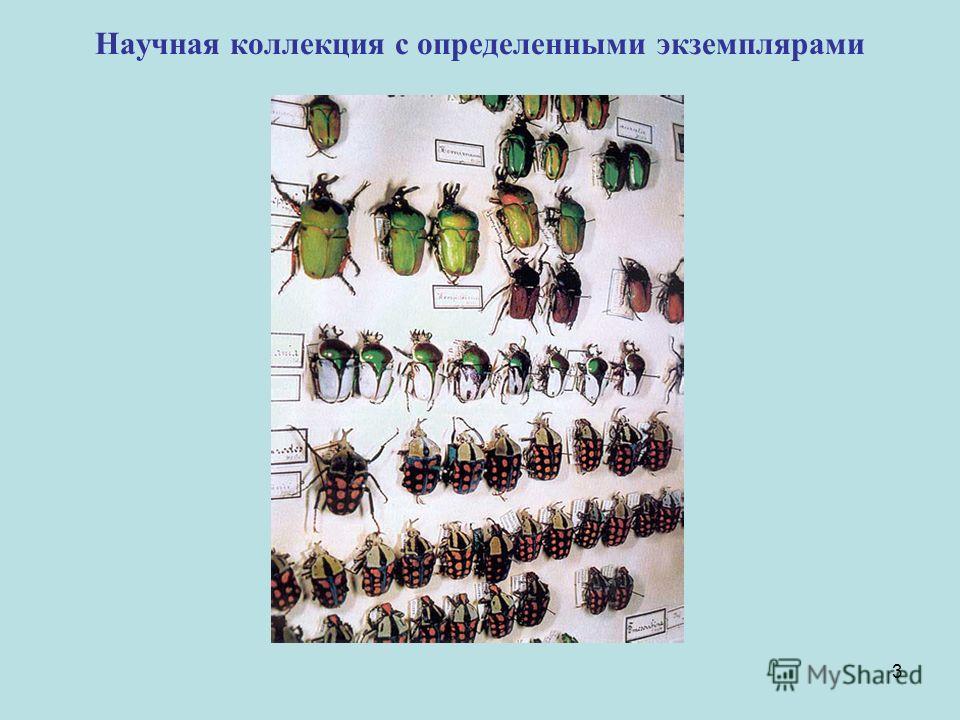 3 Научная коллекция с определенными экземплярами