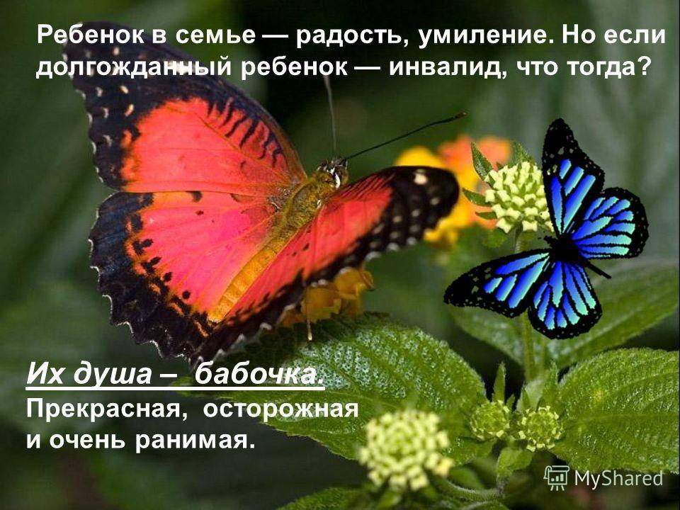 Ребенок в семье радость, умиление. Но если долгожданный ребенок инвалид, что тогда? Их душа – бабочка. Прекрасная, осторожная и очень ранимая.