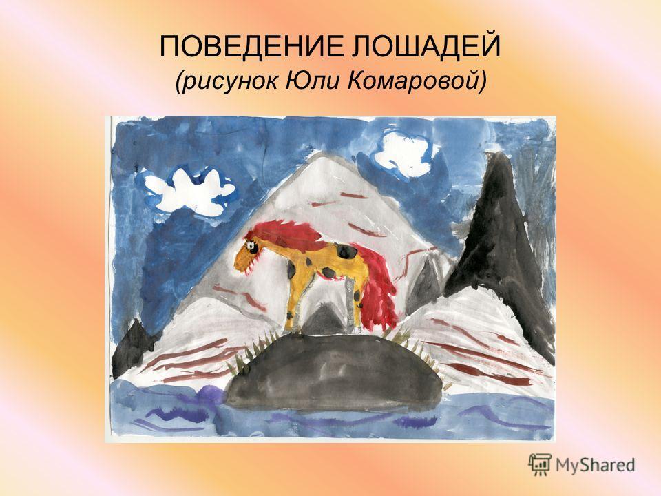 ПОВЕДЕНИЕ ЛОШАДЕЙ (рисунок Юли Комаровой)