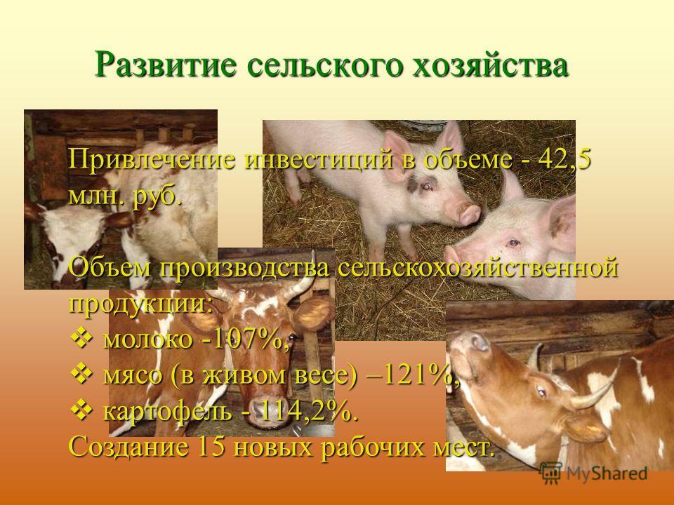 Развитие сельского хозяйства Привлечение инвестиций в объеме - 42,5 млн. руб. Объем производства сельскохозяйственной продукции: м молоко -107%, ясо (в живом весе) –121%, к картофель - 114,2%. Создание 15 новых рабочих мест.