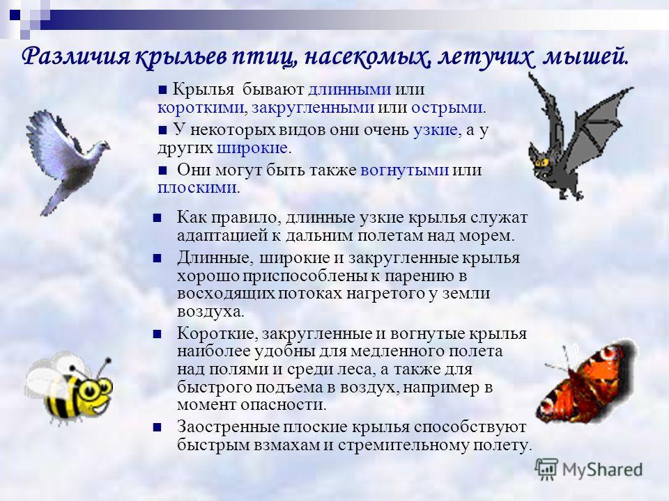 Различия крыльев птиц, насекомых, летучих мышей. Как правило, длинные узкие крылья служат адаптацией к дальним полетам над морем. Длинные, широкие и закругленные крылья хорошо приспособлены к парению в восходящих потоках нагретого у земли воздуха. Ко