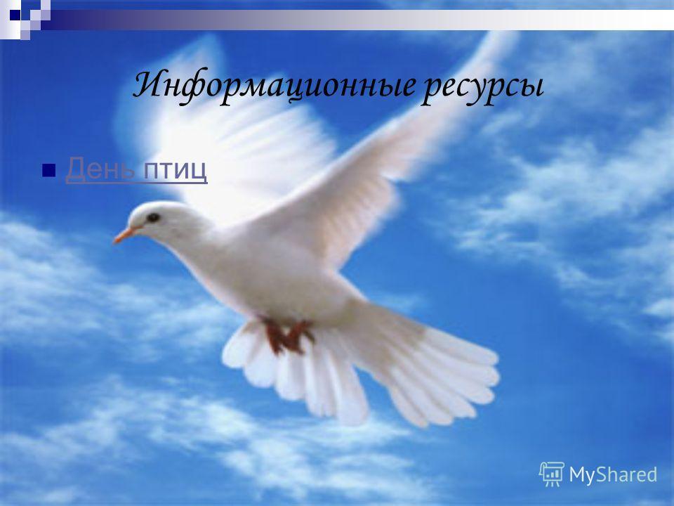 Информационные ресурсы День птиц