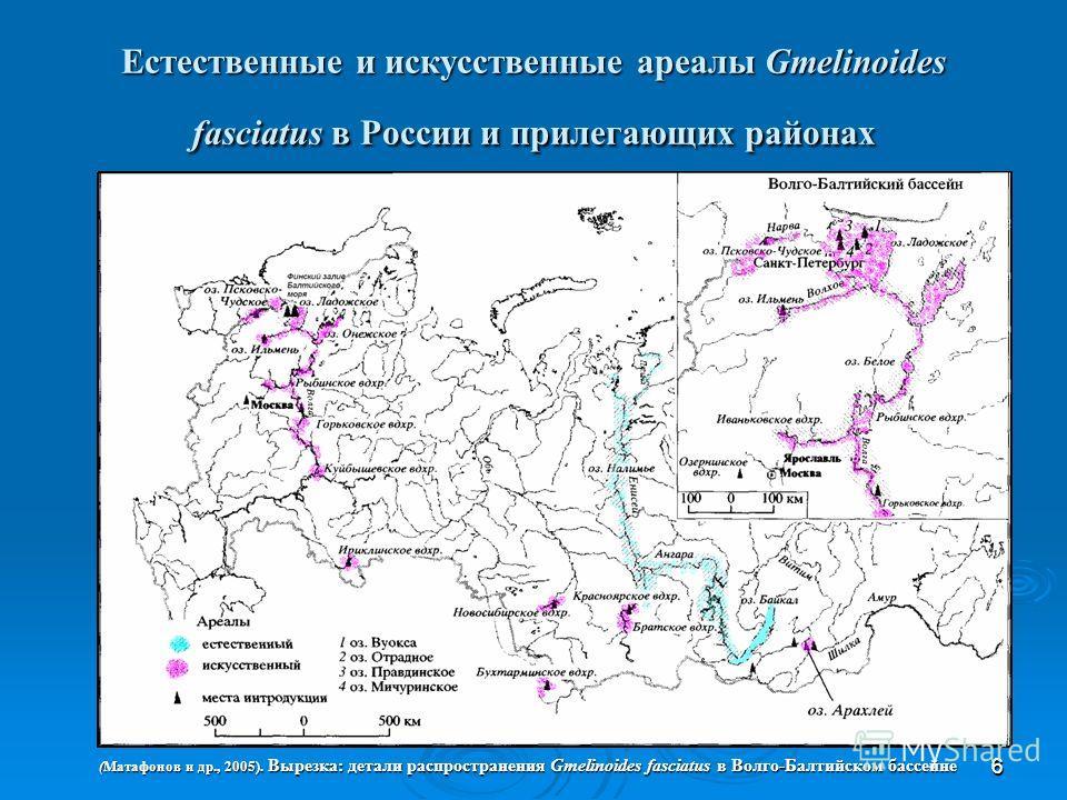 66 Естественные и искусственные ареалы Gmelinoides fasciatus в России и прилегающих районах (Матафонов и др., 2005). Вырезка: детали распространения Gmelinoides fasciatus в Волго-Балтийском бассейне