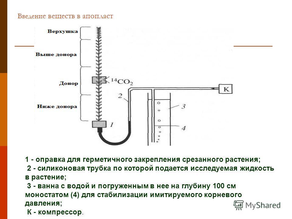 Введени е веществ в апопласт 1 - оправка для герметичного закрепления срезанного растения; 2 - силиконовая трубка по которой подается исследуемая жидкость в растение; 3 - ванна с водой и погруженным в нее на глубину 100 см моностатом (4) для стабилиз