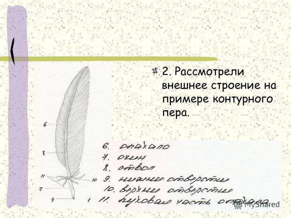 2. Рассмотрели внешнее строение на примере контурного пера.
