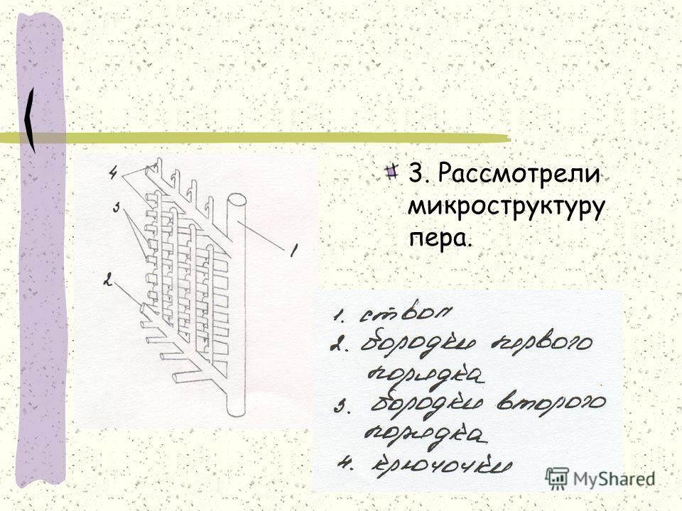 3. Рассмотрели микроструктуру пера.