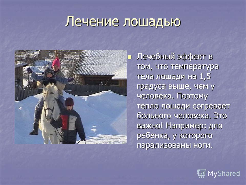Лечение лошадью Лечебный эффект в том, что температура тела лошади на 1,5 градуса выше, чем у человека. Поэтому тепло лошади согревает больного человека. Это важно! Например: для ребенка, у которого парализованы ноги. Лечебный эффект в том, что темпе