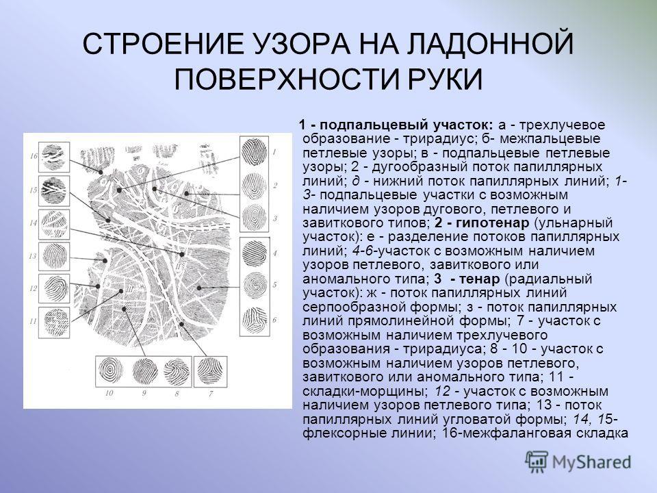 СТРОЕНИЕ УЗОРА НА ЛАДОННОЙ ПОВЕРХНОСТИ РУКИ 1 - подпальцевый участок: а - трехлучевое образование - трирадиус; б- межпальцевые петлевые узоры; в - подпальцевые петлевые узоры; 2 - дугообразный поток папиллярных линий; д - нижний поток папиллярных лин