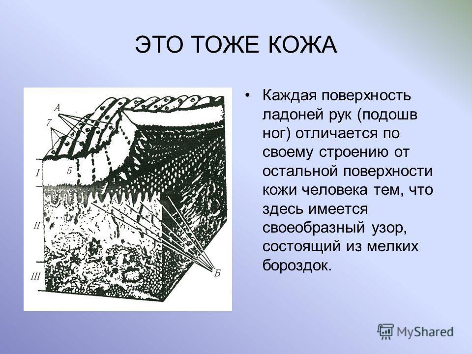 ЭТО ТОЖЕ КОЖА Каждая поверхность ладоней рук (подошв ног) отличается по своему строению от остальной поверхности кожи человека тем, что здесь имеется своеобразный узор, состоящий из мелких бороздок.