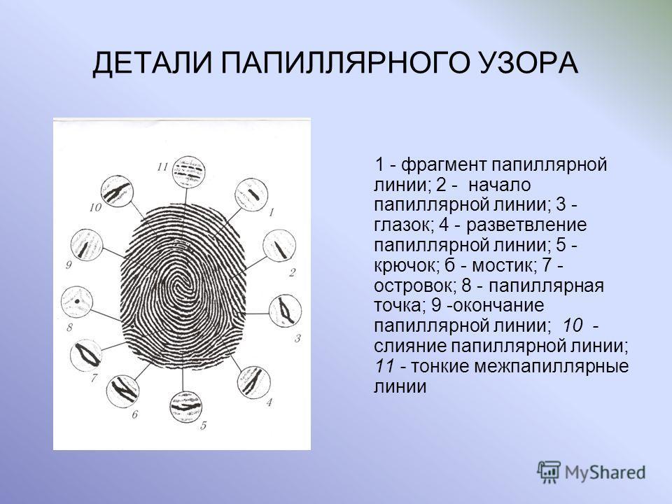 ДЕТАЛИ ПАПИЛЛЯРНОГО УЗОРА 1 - фрагмент папиллярной линии; 2 - начало папиллярной линии; 3 - глазок; 4 - разветвление папиллярной линии; 5 - крючок; б - мостик; 7 - островок; 8 - папиллярная точка; 9 -окончание папиллярной линии; 10 - слияние папилляр