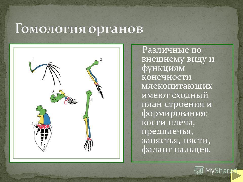 Различные по внешнему виду и функциям конечности млекопитающих имеют сходный план строения и формирования: кости плеча, предплечья, запястья, пясти, фаланг пальцев.
