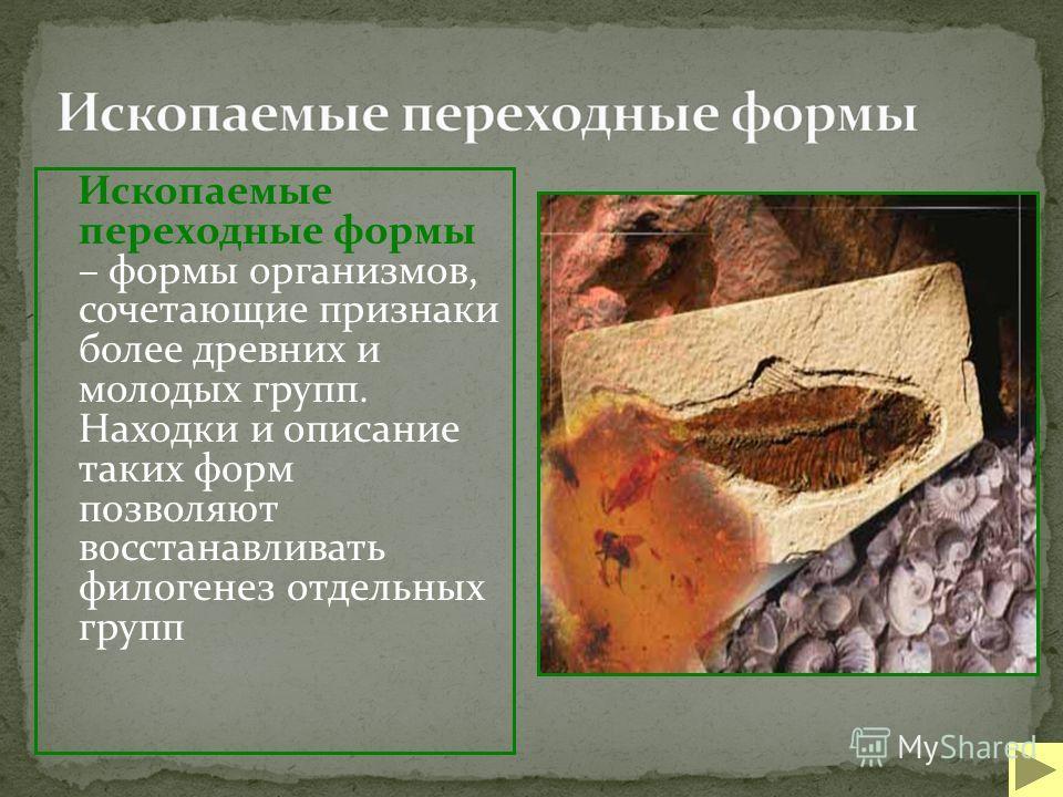 Ископаемые переходные формы – формы организмов, сочетающие признаки более древних и молодых групп. Находки и описание таких форм позволяют восстанавливать филогенез отдельных групп