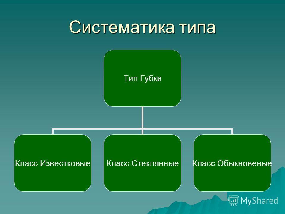 Систематика типа Тип Губки Класс Известковые Класс Стеклянные Класс Обыкновеные