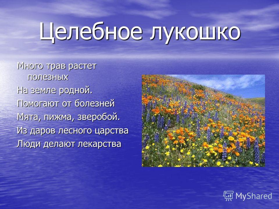 Целебное лукошко Много трав растет полезных На земле родной. Помогают от болезней Мята, пижма, зверобой. Из даров лесного царства Люди делают лекарства