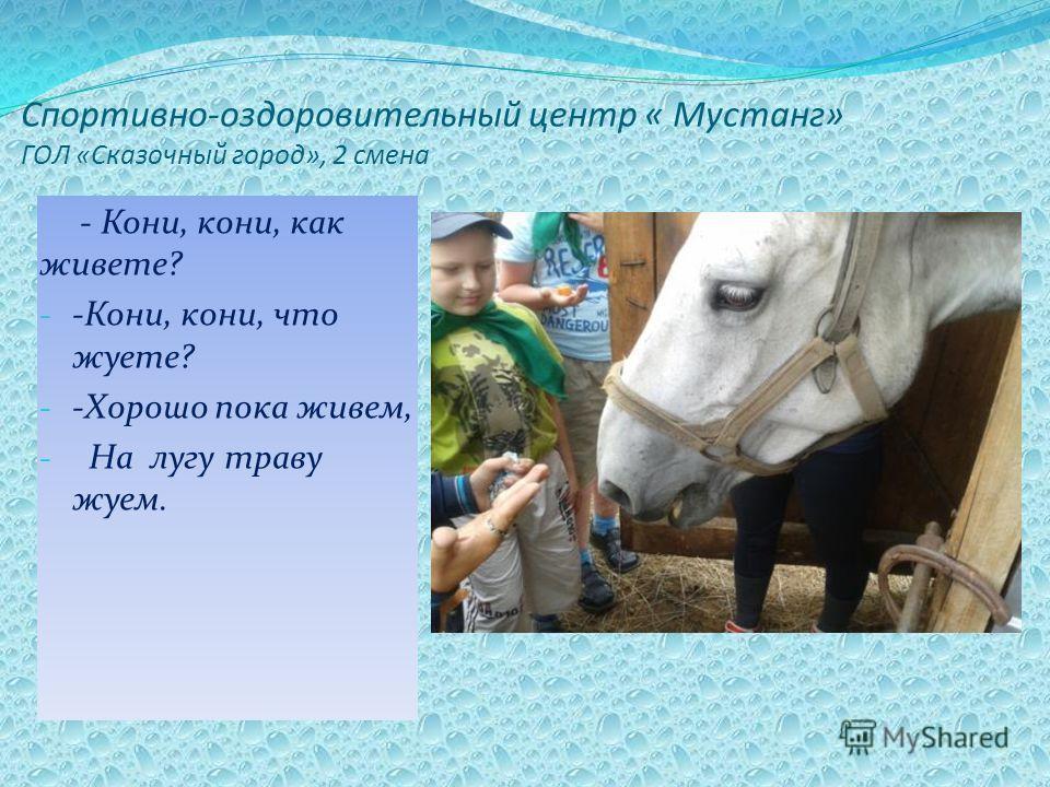 Спортивно-оздоровительный центр « Мустанг» ГОЛ «Сказочный город», 2 смена - Кони, кони, как живете? - -Кони, кони, что жуете? - -Хорошо пока живем, - На лугу траву жуем.
