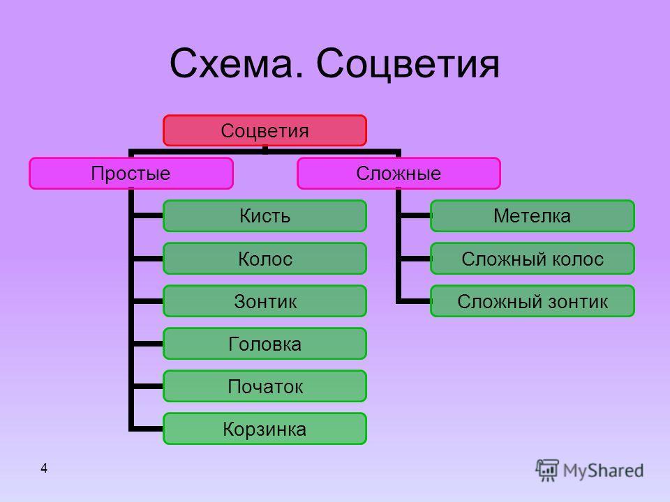 4 Схема. Соцветия Соцветия