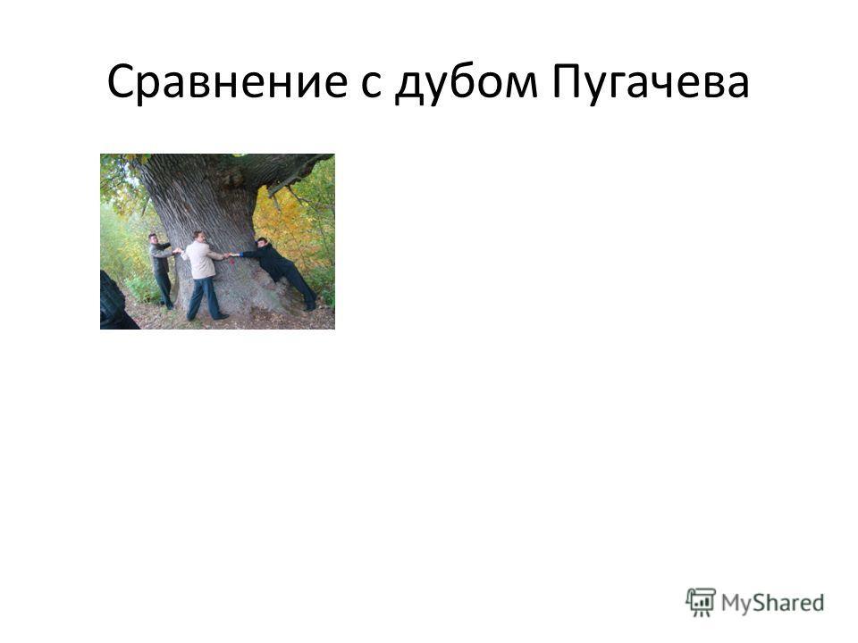 Сравнение с дубом Пугачева