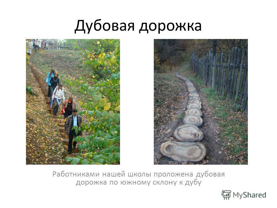 Дубовая дорожка Работниками нашей школы проложена дубовая дорожка по южному склону к дубу