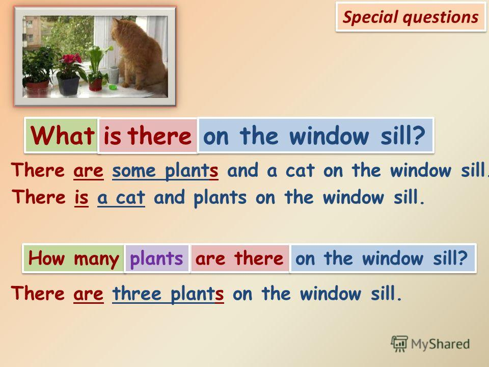 Special questions What is there on the window sill? How many are there on the window sill? plants There are some plants and a cat on the window sill. There is a cat and plants on the window sill. There are three plants on the window sill.