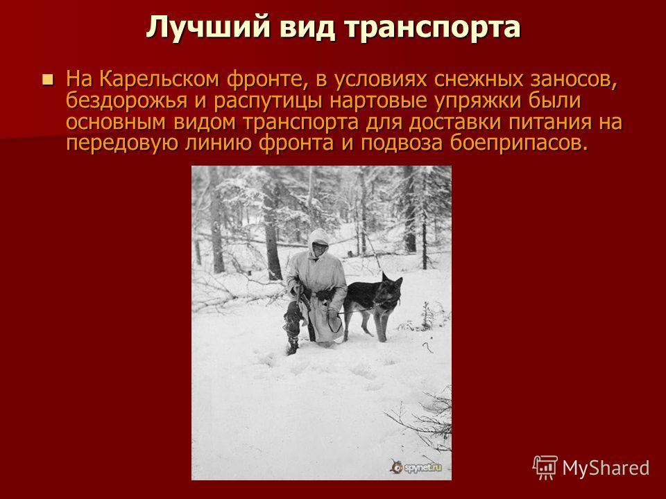 Лучший вид транспорта На Карельском фронте, в условиях снежных заносов, бездорожья и распутицы нартовые упряжки были основным видом транспорта для доставки питания на передовую линию фронта и подвоза боеприпасов. На Карельском фронте, в условиях снеж