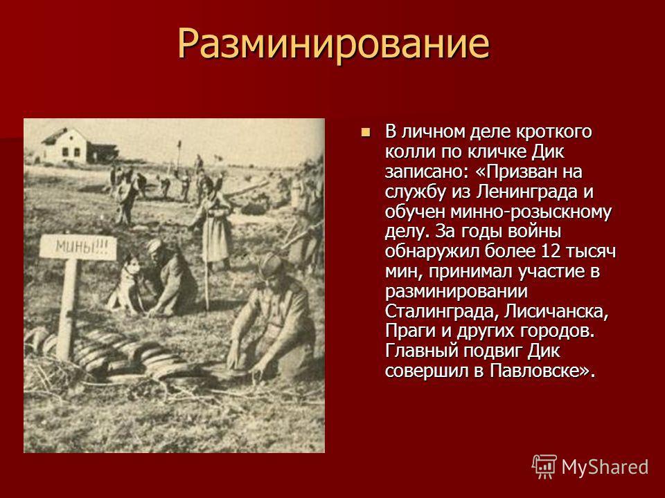 Разминирование В личном деле кроткого колли по кличке Дик записано: «Призван на службу из Ленинграда и обучен минно-розыскному делу. За годы войны обнаружил более 12 тысяч мин, принимал участие в разминировании Сталинграда, Лисичанска, Праги и других